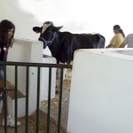 animales-buenavista05