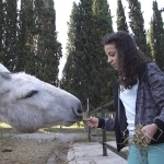 animales-buenavista09