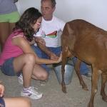 animales-buenavista11