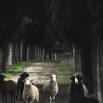 animales-buenavista15