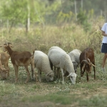 animales-buenavista21